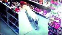 Köpeğin Küçük Hırsızlığı